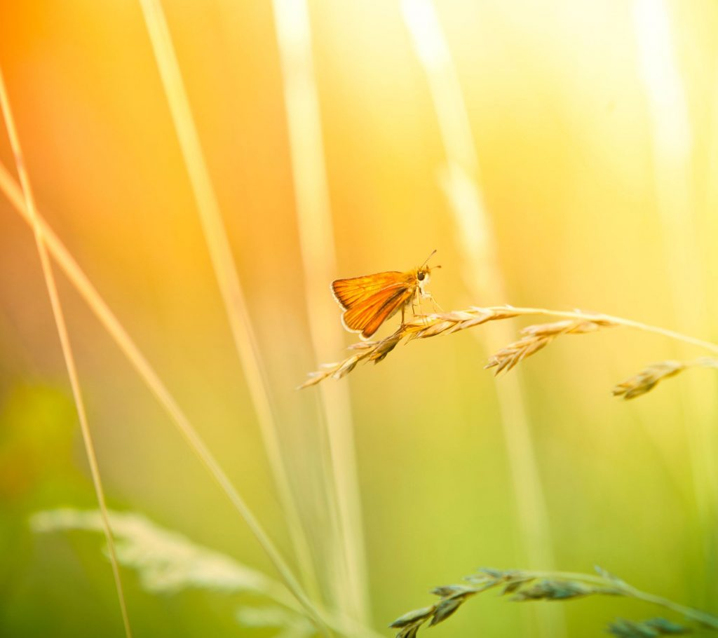 butterfly_and_wildflower_hd1080p